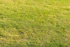 草在公园 免版税图库摄影