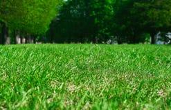 草在公园 库存照片