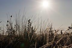 草在冬天 免版税库存图片