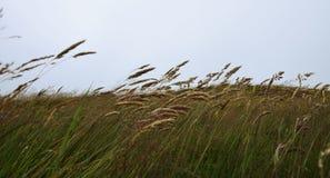 草在冬天 库存图片