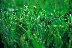 绿草在地面上增长 库存图片