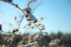 冻草在山的冬天早晨 免版税库存照片