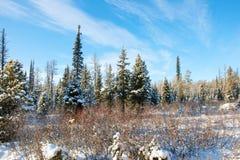 冻草在山的冬天早晨 库存图片
