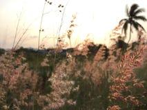 草在庭院里 免版税库存照片