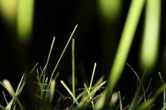 草在晚上 工厂 自然 惊人的本质 免版税库存图片