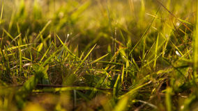 草在晚上 库存图片