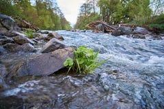 草在有石头的一条田园诗河和树在背景中 图库摄影