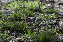 绿草在森林,阳光里 免版税图库摄影