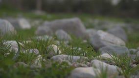 草在石头中增长 影视素材