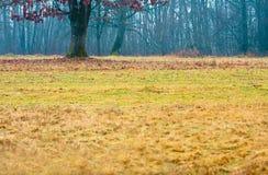 草在秋天森林里 免版税库存照片