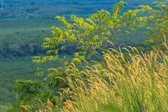 草在秋天 库存图片