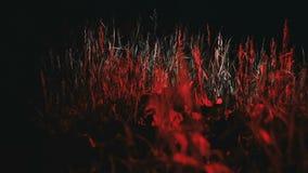 草在红灯树荫下增长  股票录像