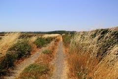 草在纳帕谷的盐沼 免版税库存照片