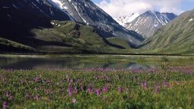 草在背景中增长在一个湖外面 天空反射自然和自然 股票录像