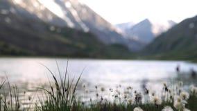 草在背景中增长在一个湖外面 天空反射自然和自然 影视素材