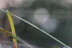 草在英国庭院,特写镜头里,用淡紫色和小flowes 12 图库摄影