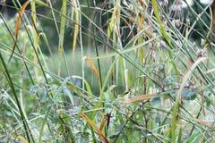 草在英国庭院,特写镜头里,用淡紫色和小flowes 14 免版税库存图片