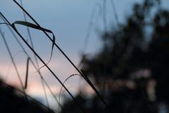 草在英国庭院,特写镜头里,用淡紫色和小flowes 15 图库摄影