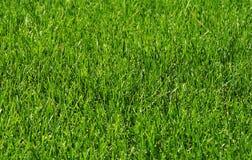 草在阳光下 免版税库存图片
