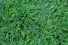 草在雨中 免版税库存图片