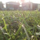 草在黎明在印地安村庄 免版税库存照片