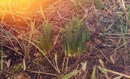 草在3月 库存照片