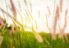 草地和草花与轻的日出的早晨 免版税库存图片
