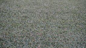 草地板样式 免版税库存照片