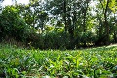 草地树背景在公园 免版税库存图片