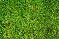 绿草地毯 库存图片