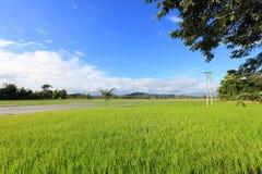 草地,与电杆的养鱼塘在Dak Lak的越南一个村庄附近 免版税库存图片
