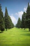 草坪公园结构树 免版税库存照片