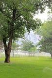 草坪和树在公园 免版税库存图片
