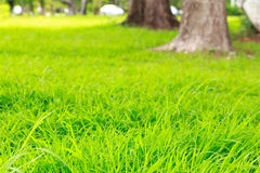草坪和树 免版税库存图片