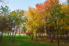 草坪和红色叶子 库存图片