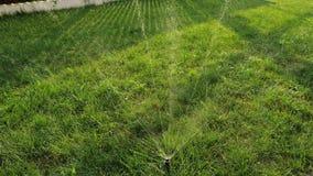 草坪喷水隆头在绿色庭院浇灌的草中站立 股票视频