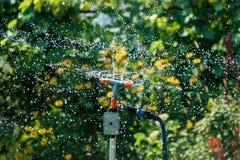草坪喷水隆头 图库摄影