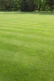 草坪在公园 库存图片