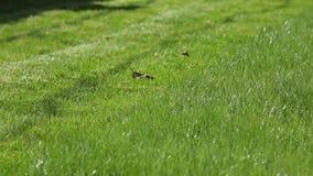 草坪在后院 股票录像