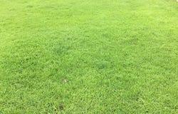草坪在庭院的草地 库存图片
