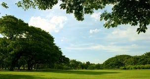 草坪在庭院里 免版税图库摄影