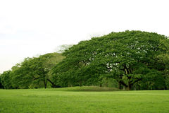 草坪在庭院里 图库摄影