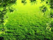 草坪在春天 免版税库存图片