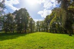 草坪在森林里 库存图片