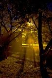 草坪晚上浇灌 免版税库存图片