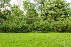 草坪灌木和树在公园 图库摄影