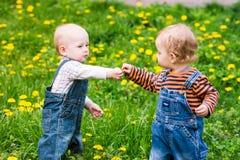 草坪的两个逗人喜爱的男婴用蒲公英 库存图片