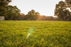 草坪的人们 免版税库存图片