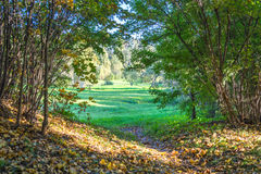 草坪的看法从密集的丛林的 免版税图库摄影