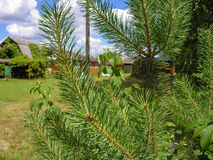 草坪的看法 免版税库存图片
